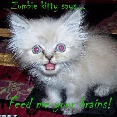 Attack Cat on Craigslist Zombiekitty