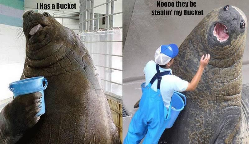 Random funny pictures! Bucket
