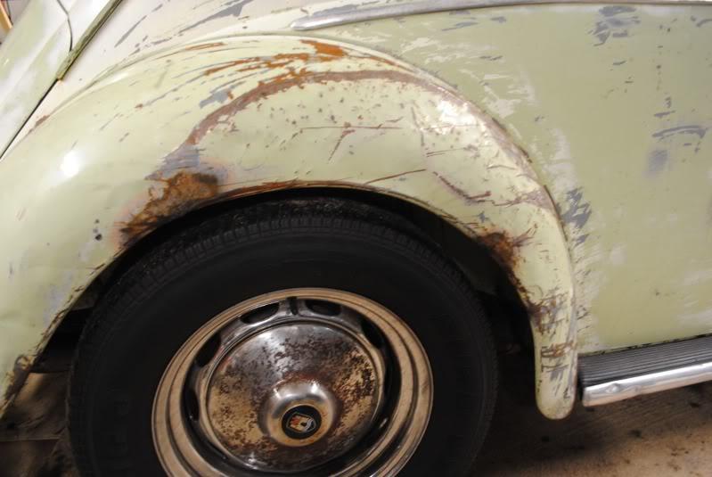 Eeva  61 Beryl Bug DSC_0290