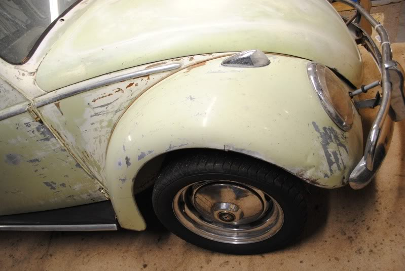 Eeva  61 Beryl Bug DSC_0295