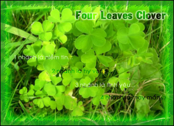 Meaning Of The Four-Leaf Clover Clover01