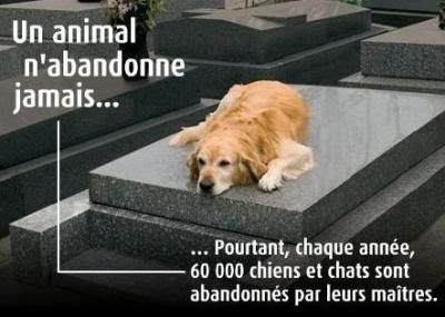 Abandon des animaux. 2054483989_small_1