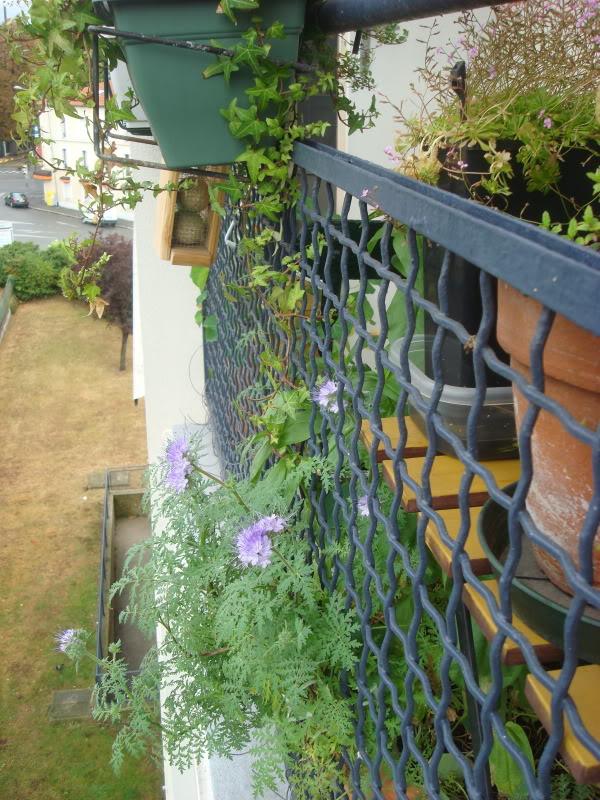 au balcon DSC08932