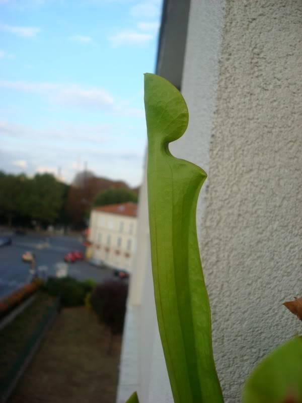 au balcon DSC09106