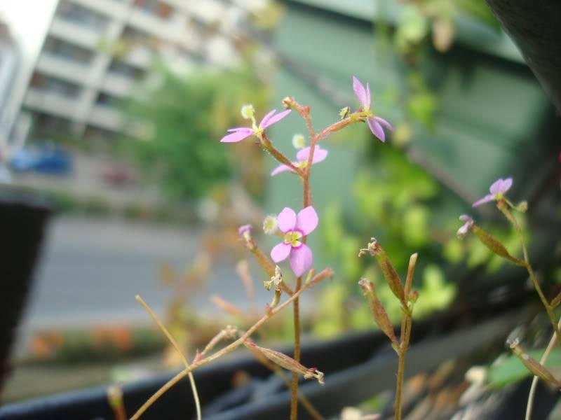 au balcon DSC09111