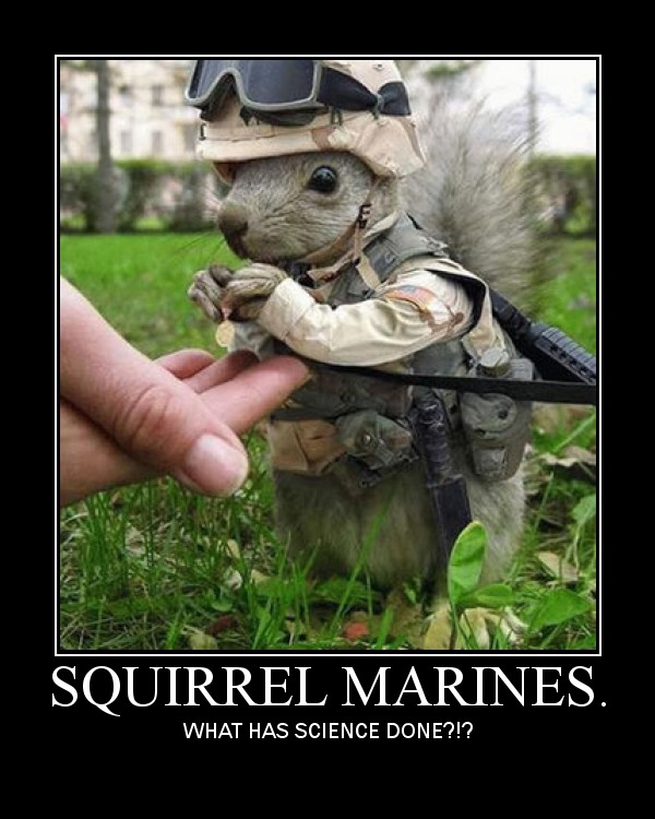 Funny or Intersting Pictures - Page 2 Squirrelzes