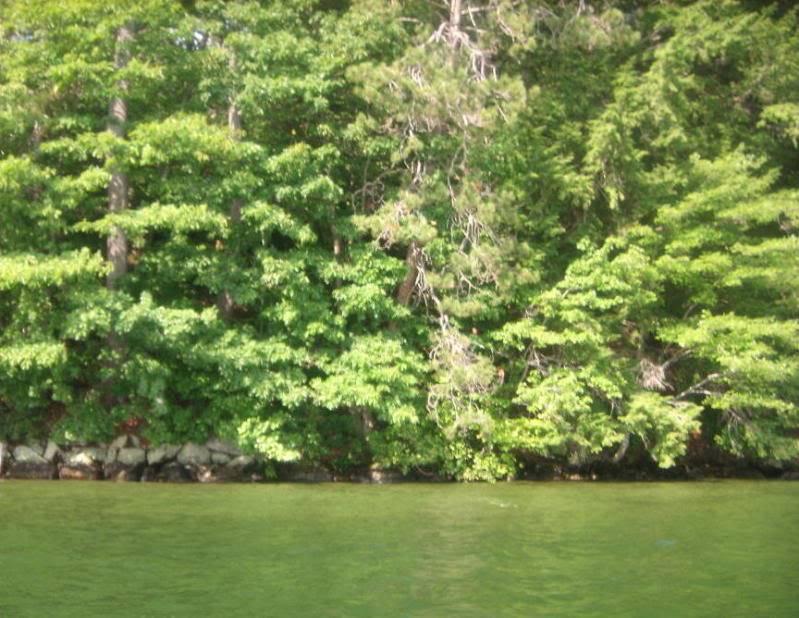 Morrison Cove's Rafting Problem...? GEDC0035_zpsa525887e