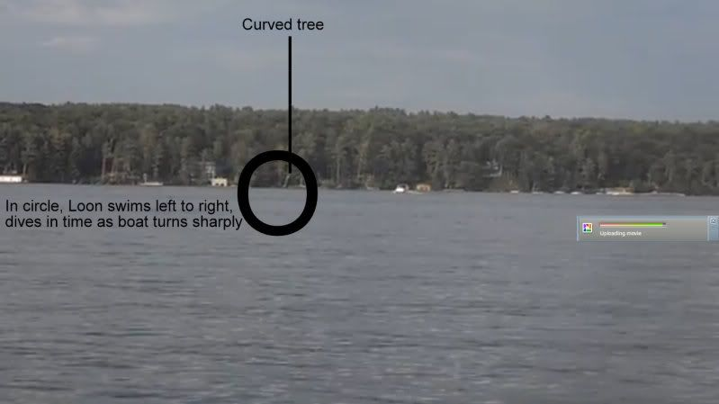 Study—Up to 36% of Loon Fatalities are Boat Impacts... P8060156-YouTube-AdobeFlashPlayer810201370808PM_zps42f373d1