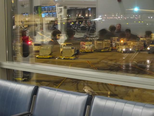 De Orlando para Luanda - Reporte Fotografico Real. IMG_0079