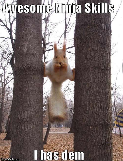 Funny Pics Squirrel_ninja_skills