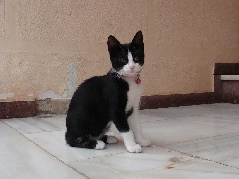 PIRUJA, gatita de 5 meses necesita ADOPCIÓN URGENTE almeria DSC06839