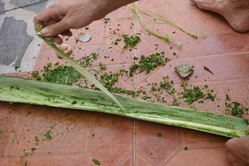 Extracción de fibra de pita 4-7