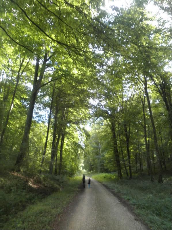 Fotos del bosque normando P9180158