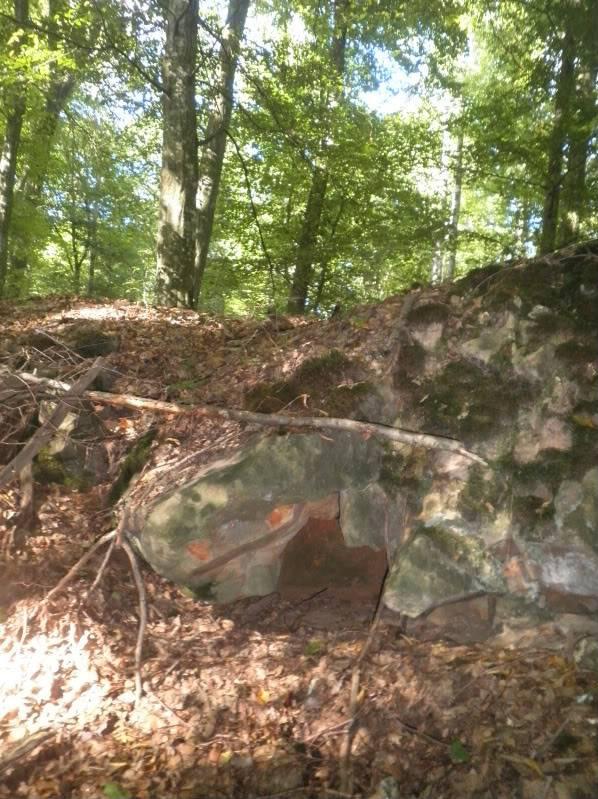 Fotos del bosque normando P9180165