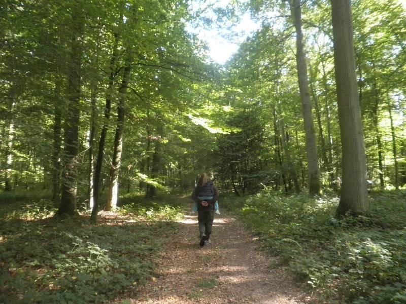 Fotos del bosque normando P9180168