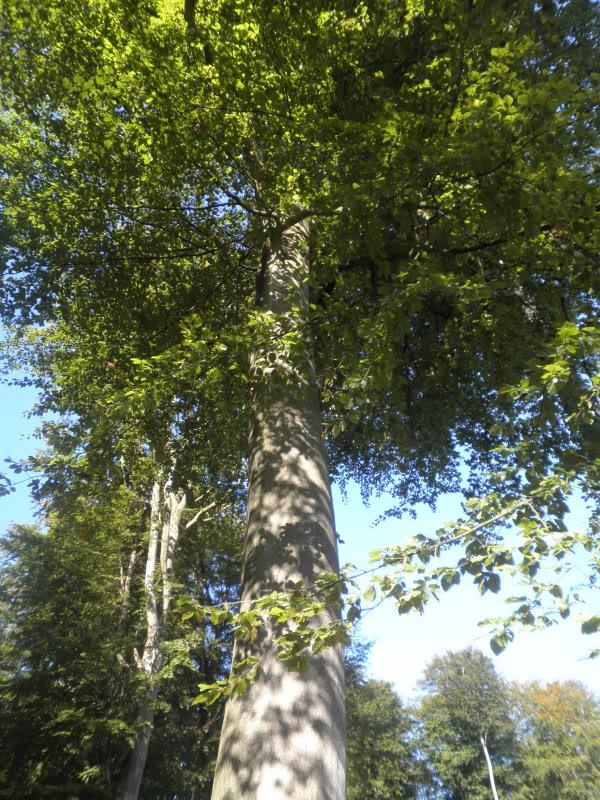 Fotos del bosque normando P9200205-1