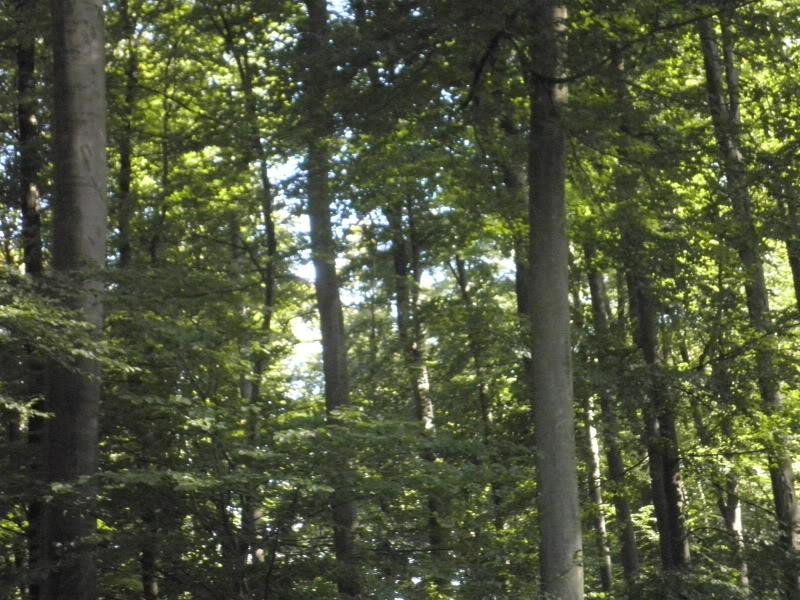 Fotos del bosque normando P9200217
