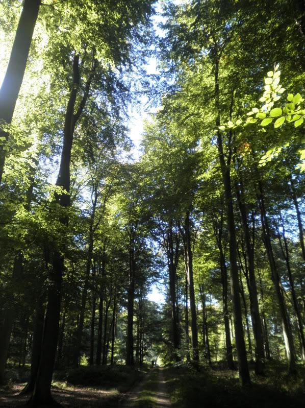 Fotos del bosque normando P9200226