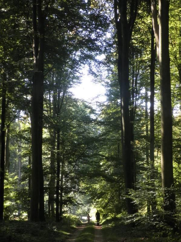 Fotos del bosque normando P9200227