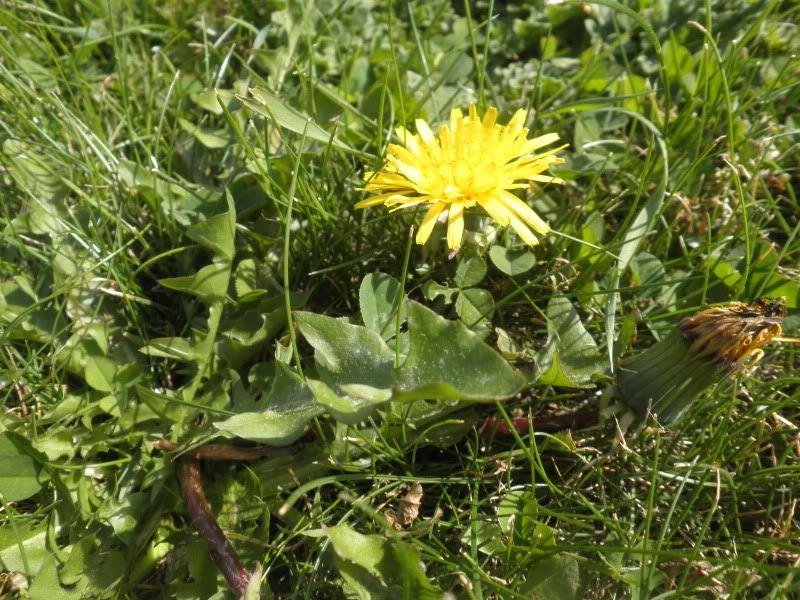 Ayuda identificando una planta comestible P9200238