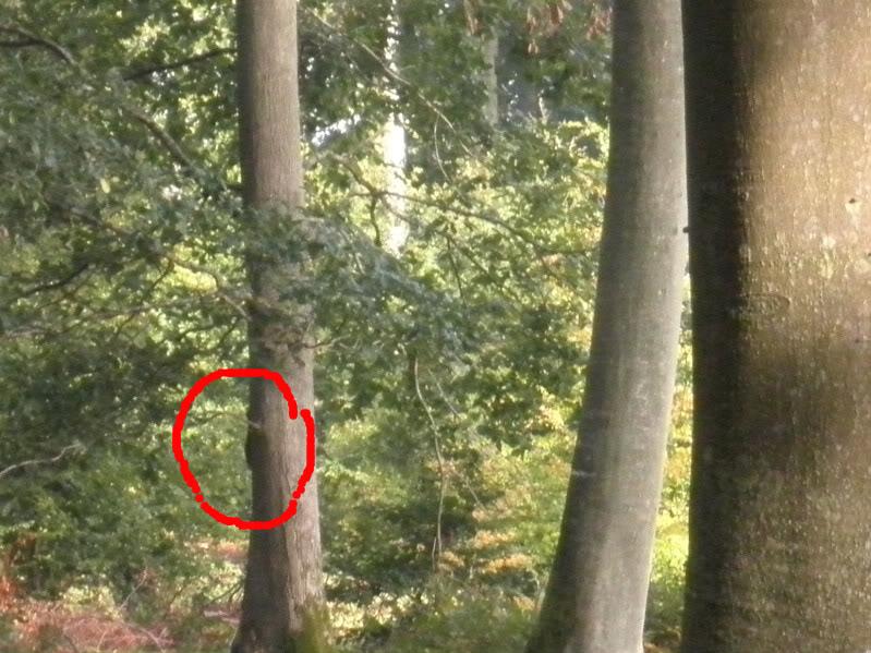 Fotos del bosque normando P9240004-1