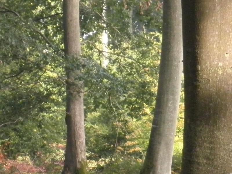 Fotos del bosque normando P9240004