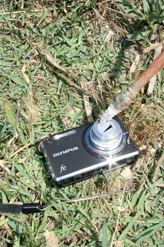 Flecha hecha con junco  IMG_9063