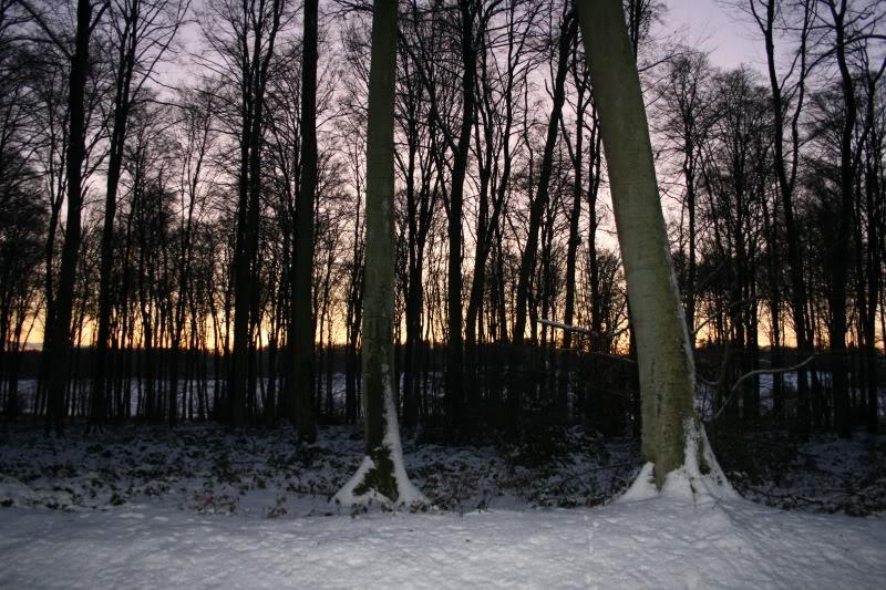 Bosques de Normandía. Imagen080
