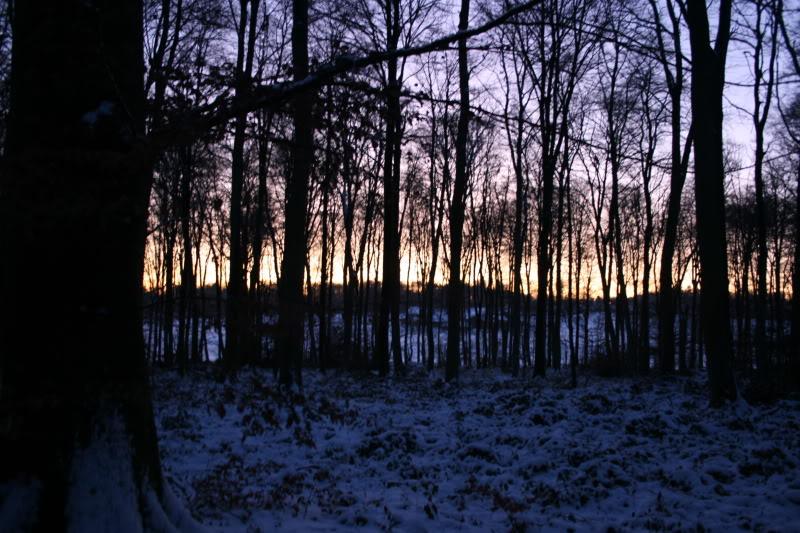 Bosques de Normandía. Imagen101-1
