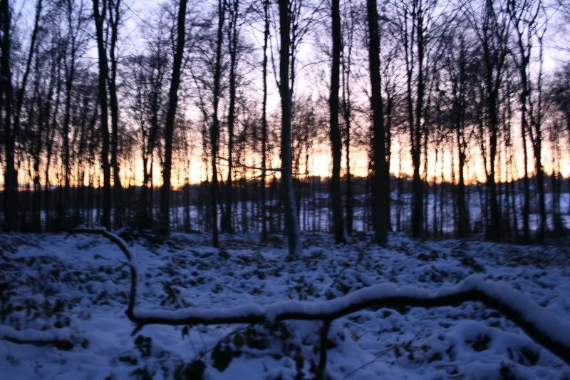 Bosques de Normandía. Imagen103