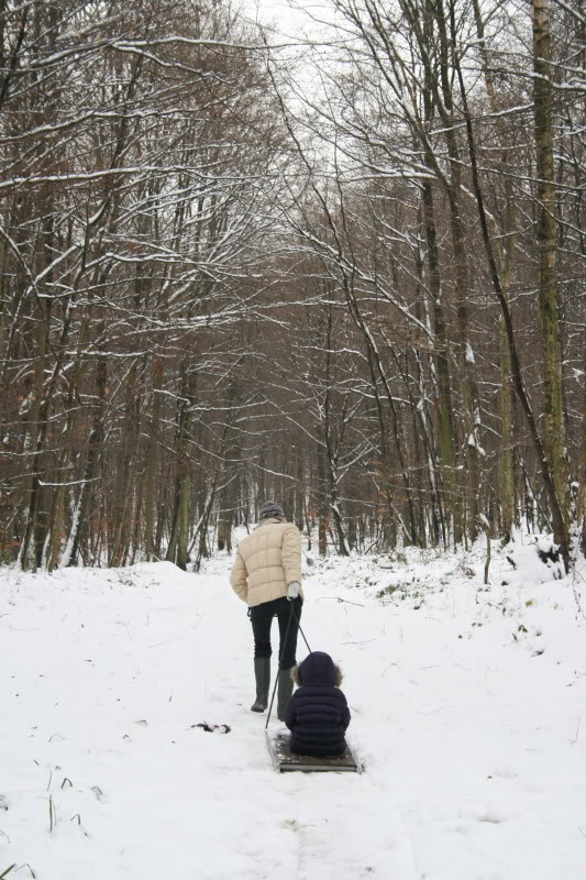 Bosques de Normandía. Imagen161