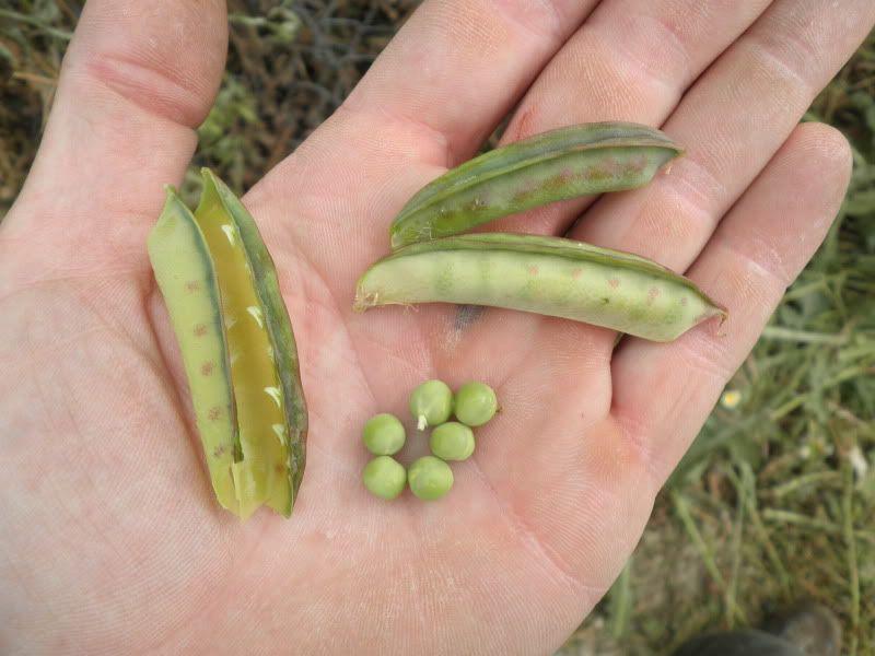 Ayuda identificando planta. P4200020