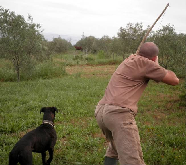 Escena  de caza con perro. P5010042