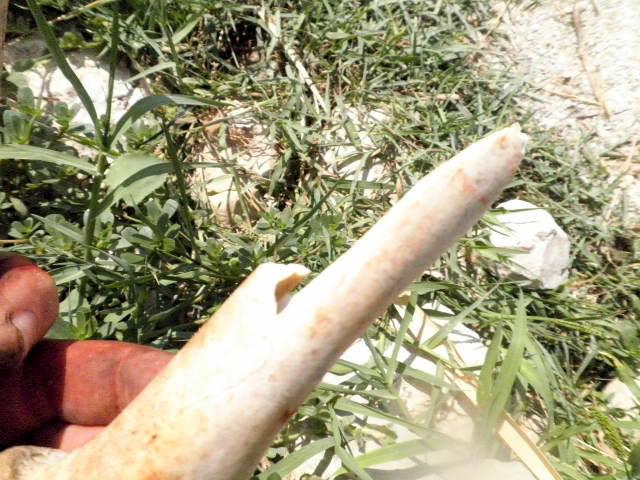 Punta de flecha P8130160