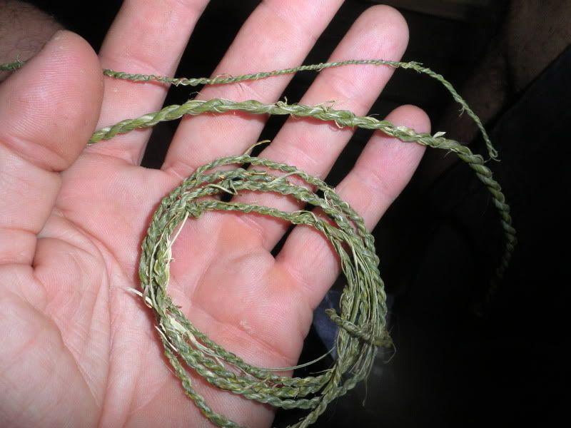 Usando palmito para hacer cuerdas. P9070045