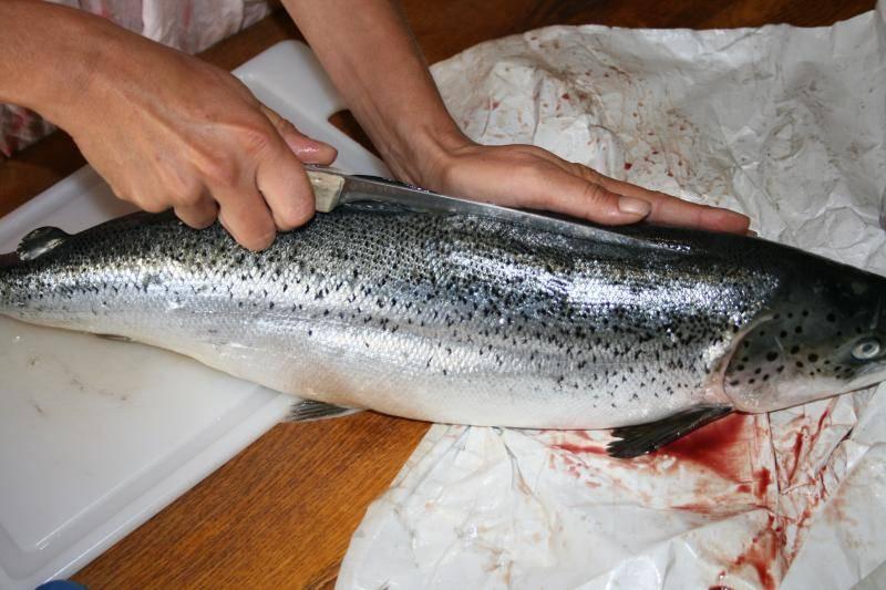 Curtido de piel de salmón. IMG_0932_zps38f82696