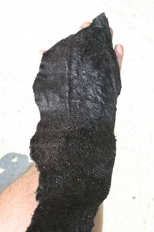 Curtido de piel de salmón. IMG_1166_zps575f8a18