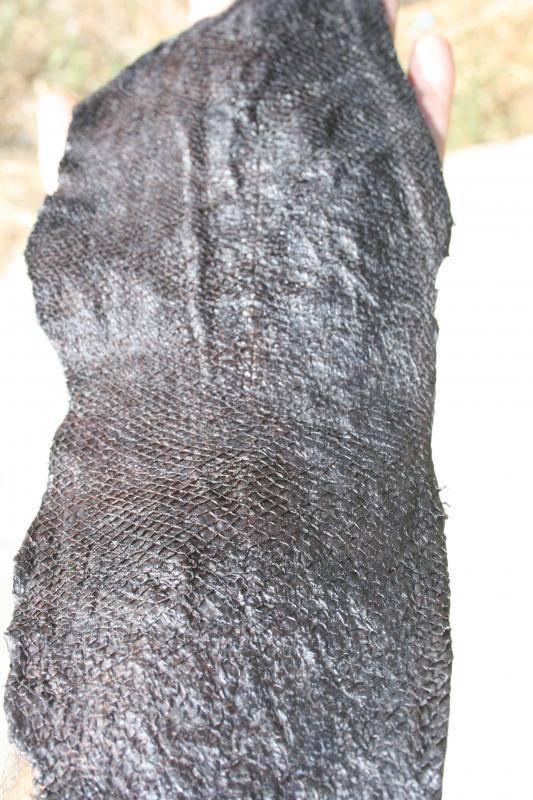 Curtido de piel de salmón. IMG_1167_zps5e9b6f39