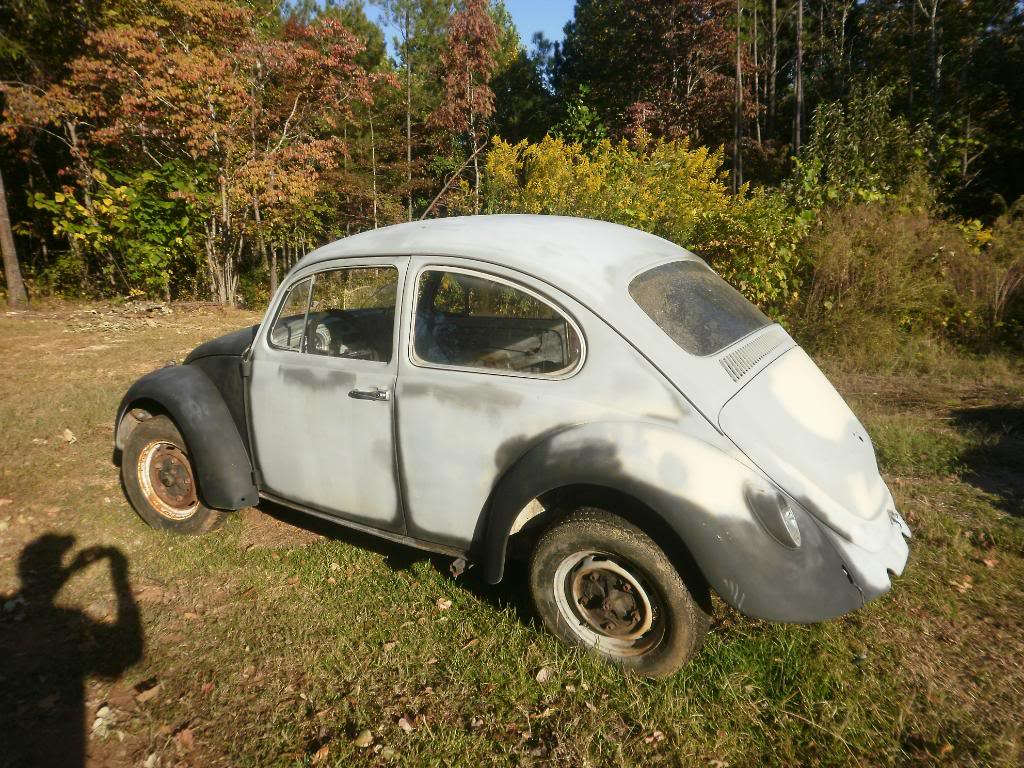 Madde the 67 beetle Projects015