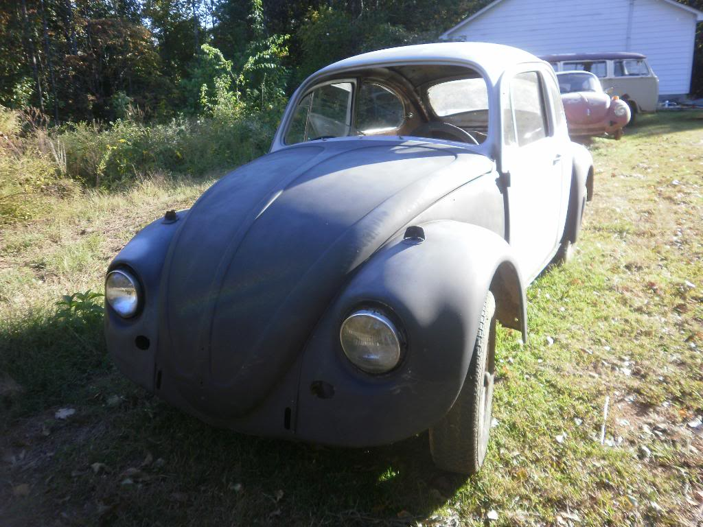 Madde the 67 beetle Projects016