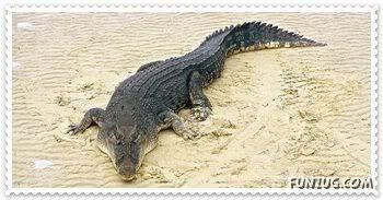 Pet Demonds Profiles Crocodile