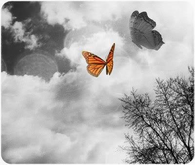 Crno-bijelo u boji Butterfly