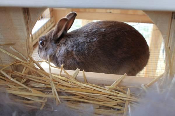 Rabbit Babies IMG_5357-R_zps76fb276e