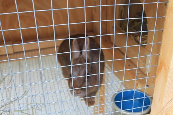 Rabbit Babies IMG_5358-R_zps647f4929