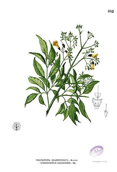 குறிஞ்சிப்பாட்டில் 99 மலர்கள்:பட்டியல் நிறைவு பெற்றது ! - Page 3 37ae0aeaae0aebee0aea4e0aebfe0aeb0e0