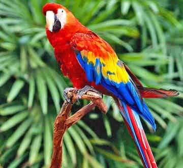 சிறுவர்களுக்கான பாடல்கள்--  துள்ளி ஓடும் மான்  Parrot-0016