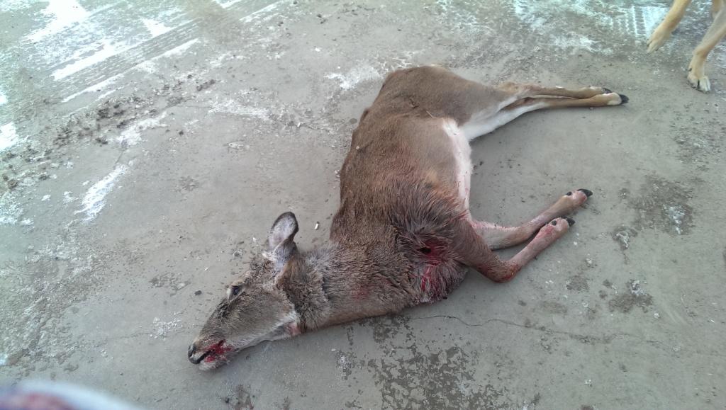 First Deer 1390876435_zps6ac62fda