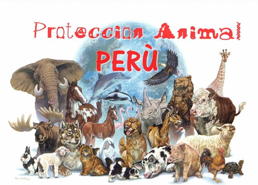 Protección a los animales