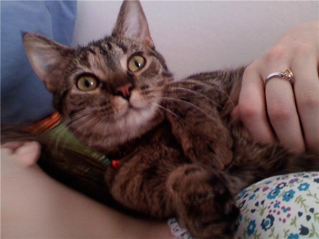 The Official Pet Photo Thread Tetra2