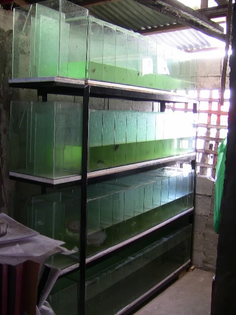 TMb's FH Angkilan Wilson Farm IMG_0776